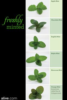 Move over, peppermint! A well-known digestive aid, mint comes in many varieties, including apple, chocolate, and mojito. And it's easy to grow your own. alive.com