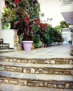 Entrance....🏡🌺🌱🌞 #angelos_apartments #Alonissos #Sporades #Greece #greekislands #discoveralonissos #visitalonissos #island #surroundings #flowers