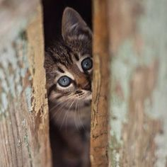 Giochiamo a nascondino?