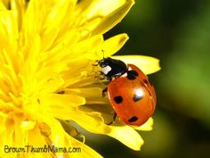 Control insects in your vegetable garden naturally