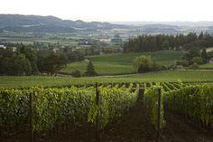 Adelsheim Vineyards [Bryan Creek Vineyard]. Chehalem Mountain AVA. Newberg (area), Oregon