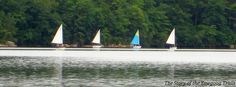 Sailboats as viewed from Armstrong Point at Camp #Yawgoog; on the Yellow Trail.  Image by David R. Brierley.