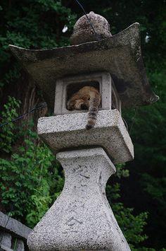 cat in stone lantern