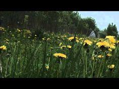 смотрит лес зелеными глазами(пой ей песни)Музыка Олега Сапегина,слова Ал...