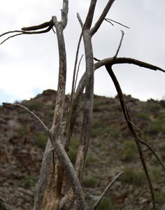Dead Tree Wash, South Mountain 2011 #abandoned