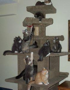 cat_tree.jpg #cattree - More about Cat Tree at - Catsincare.com!
