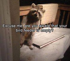 And some suet wouldn't hurt either