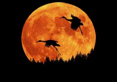Sandhill Cranes and full moon rising against skyline