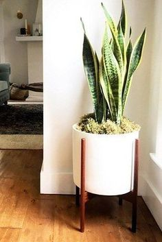 Snake Plant (Sansevieria trifasciata)   15 Air-Purifying Plants That Will Turn Your Home Into A Lush Forest #houseplantsairpurifying
