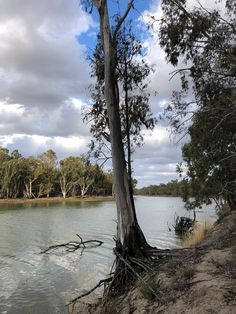 A river red gum clings to the bank of the Murray River, Murray-Sunset National Park. Victoria Australia, South Australia, Western Australia, Outback Australia, Murray River, Red River Gorge, Camping, Cool Photos, Amazing Photos
