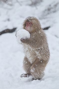 Carrying the Snowball by Masashi
