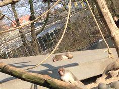 Lekker slapen op de apenrots