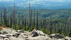 Soziale Systeme: Der Wald ist doch noch nicht tot