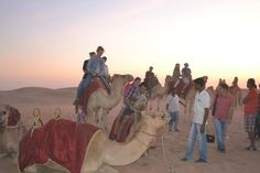 Camel Riding in the Morning