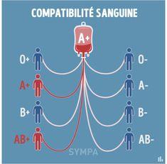 Groupe Sanguin Compatibilité O, A, B, AB