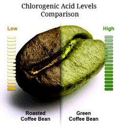 Scientists suggest that the beneficial effects of green coffee beans can be attributed to their chlorogenic acid. However, chlorogenic acid is not present in roasted coffee beans. Green Coffee Beans and Weight Loss. Easy Weight Loss, Healthy Weight Loss, How To Lose Weight Fast, Losing Weight, Reduce Weight, Tostadas, Green Coffee Diet, Bean Diet, Green Coffee Bean Extract