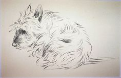 CAIRN TERRIER Vintage Mounted 1936 'Mac' Lucy by Hollysprints