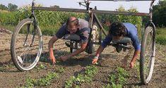 Is Vermiculite Safe For Organic Gardening Organic Farming, Organic Gardening, Gardening Tips, Farm Gardens, Outdoor Gardens, Garden Projects, Garden Tools, Potager Palettes, Dragon Garden