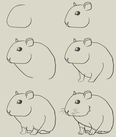 Hamster drawing guide