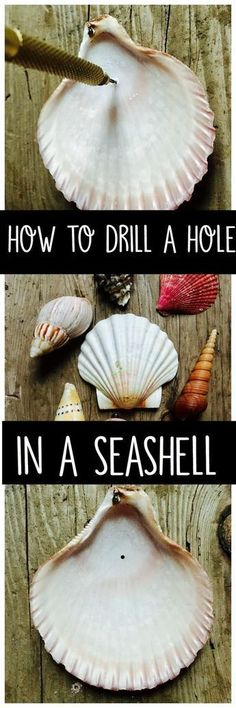 Learn how to drill a hole in a seashell with a simple tool you can purchase from the craft or hardware store. Make crafts or decorations with your shells. #howtomakeseaglass