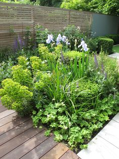 As featured on Love Your Garden. Planting combinations - Astrantia 'Large White'. Euphorbia x martini. Salvia x sylvestris 'May Night'. Sedum Matrona. Veronicastrum 'Apollo'. Geranium 'White Ness' Buxus Clipped box cube