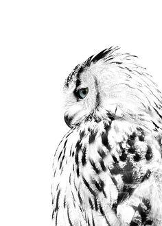 White owl, affiches dans le groupe Affiches / Formats / 40x50cm chez Desenio AB (8304)