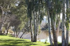 Bonnievale River Lodge: Campsites in the Western Cape River Lodge, Camping Spots, Campsite, Cape Town, Travel Inspiration, Westerns, Places, Nature, Camping