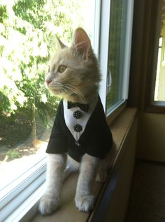 Tuxedo Cat outfit- cat clothes . $11.00, via Etsy.