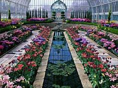 A view from inside the Conservatory in St. Paul, Minnesota.  The flowers are changed out seasonaly so it's always lovely!