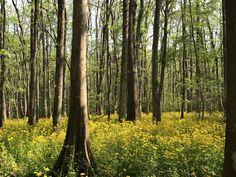 A beautiful spring day in Mandeville Louisiana [1920 x 1080] [OC] -Please check the website for more pics