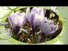 Tavasz köszöntő -  Fülemüle szonáta The Voice, Spring, Music, Nature, Plants, Muziek, Flora, Musik, Plant