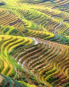 Rice colours and terraces #ClusterInternationalWorkshop #Expo2015 #ExpoMilano2015 #Expo2015Cluster #ClusterRice