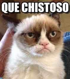 memes chistosos - Google Search