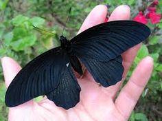 black animals - Google Search