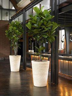 Sch ne zimmerpflanzen so dekorieren sie ihr zuhause mit for Pflanzen wohnzimmer geeignet