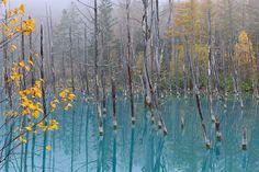 The Blue Pond Of Late Autumn - Biei in Hokkaido,Japan  (by Kent Shiraishi)