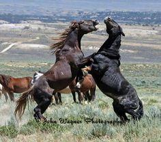 Sandwash Basin Mustang