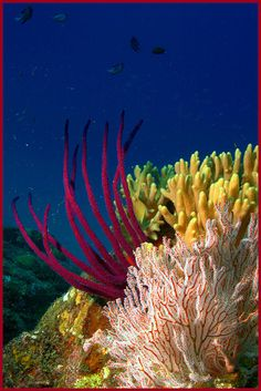 Coral Reefs- inspiration for Under the sea collection www.cleoferinmercury.co.uk