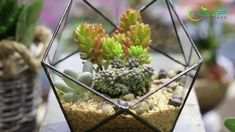 geometric  terrariums Glass Terrarium, Terrariums, Planter Ideas, Planters, Home Interior Design, House Warming, Creative, Terrarium, Plant