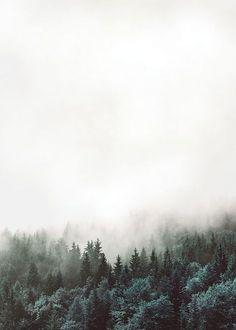 Affischer, posters och prints online. Skandinavisk inredning. Fotografi av skog och natur