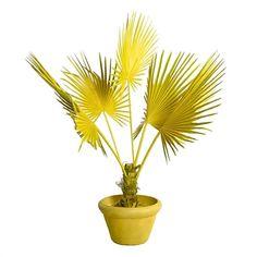 Fan palm in pot geel sold by pols potten, http://vps18379.public.cloudvps.com.
