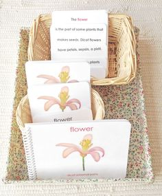 Language: Parts of the Flower Book & Card Set - Maitri Learning