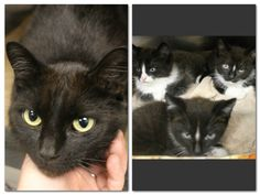 RESCUED>Intake: 6/9 Available: 6/15 (Has to be out on the 16th)  NAME: Sasha & kids  ANIMAL ID: 28067309 BREED: DSH  SEX: Female  EST. AGE: 2 yrs  Est Weight: 6.15 lbs  Health:  Temperament: Friendly  ADDITIONAL INFO:  RESCUE PULL FEE: FREE!!