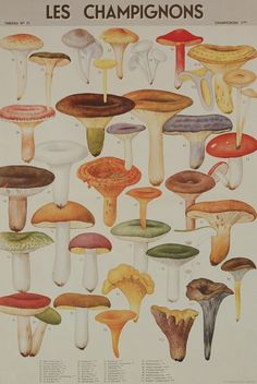 """Hollanders is a really great source for ordering specialty papers of the finest quality. They have a very extensive selection and reasonable prices. Patterns range from historic to vintage to contemporary.  The paperr pictured is: """"Florentine Print Les Champignons Mushrooms""""."""