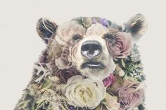 Double Exposure 'Bear and Roses' by Bugcessories Design on @creativemarket