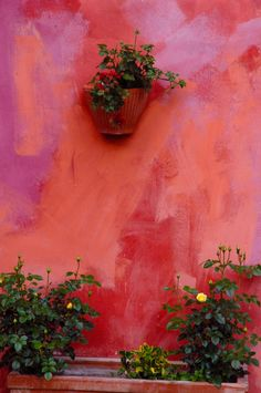 Wall - Piedmont Region, Italy