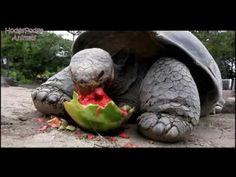 very cute :)