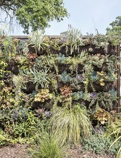 Photo 6 of 10 in Living Green Walls Their Benefits and How… How to plant a living wall, Dwell Magazine. A variety of drought-tolerant plants cascade down a vertical garden wall near the entrance to the property. Landscape Design, Garden Design, Green Facade, Vertical Garden Wall, Succulent Wall, Drought Tolerant Plants, Dry Creek, Edible Garden, Plant Wall