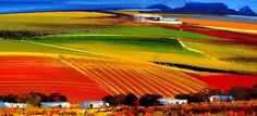 Beat the Traffic with Tapas and Vine at Durbanville Hills Provinces Of South Africa, Wine Tourism, Eternal Sunshine, On The Road Again, Cape Town South Africa, Countries Of The World, Wine Country, Farms, Wines