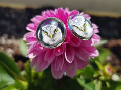Earrings with real photo of an owl taken in Balsfjord, Norway. Free from nickle. Photo is glued with glass tile on top. Star Photography, Nature Photography, Holidays In Norway, Types Of Rings, Yellow Flowers, Earrings Handmade, Cufflinks, Owl, Handmade Items